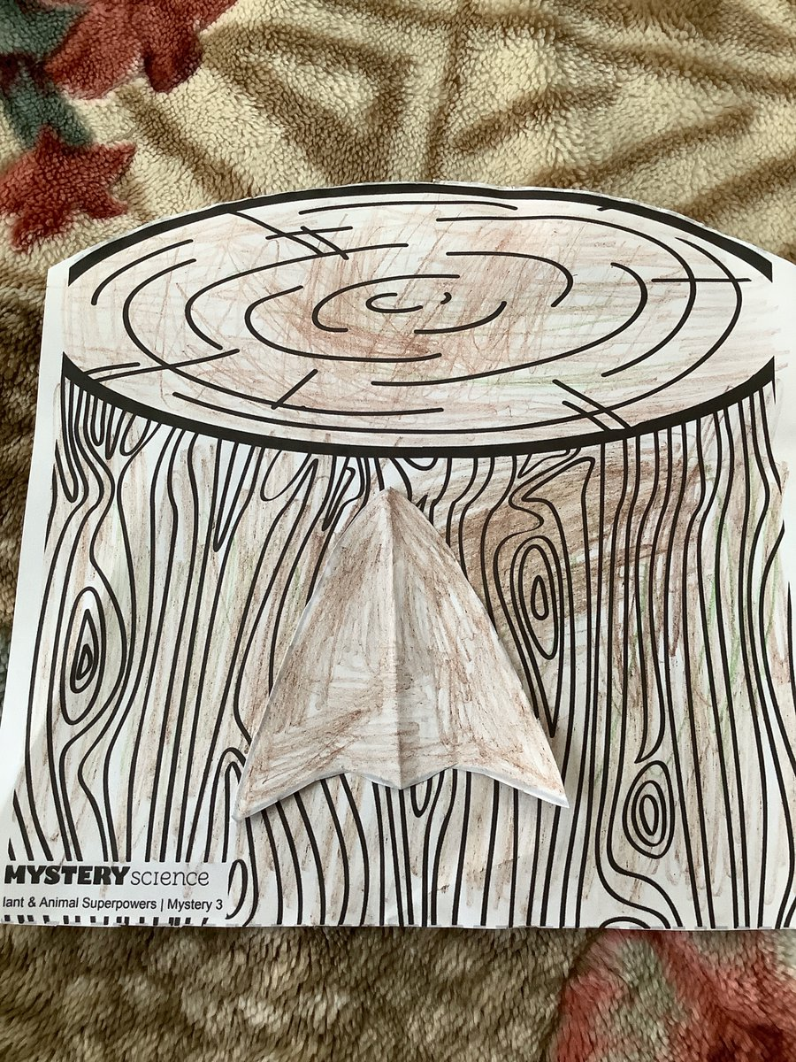This week #FirstGraders are learning about how animals use #camouflage. Anahi did a wonderful job helping a moth hide on a tree stump. Can you find the animals in the other pictures? @HamptonBaysES #HBStrong #WeAreHBpic.twitter.com/yPnXupjRCw