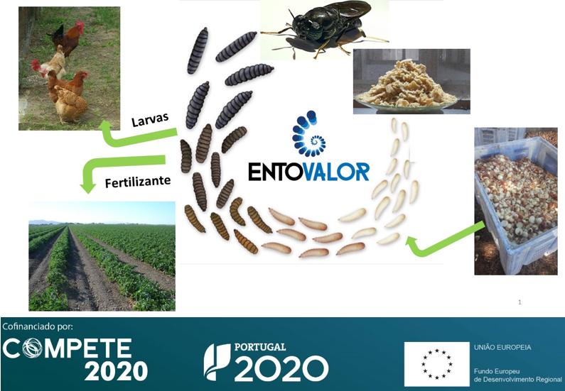 #Entrevista ao CEO da #IngredientOdyssey sobre #entovalor que visa contribuir pª transição pª uma #economiacircular no sector #agroalimentar. Saiba os resultados alcançados na #newsletter 253 https://bit.ly/2ZyQJFL #compete2020 #portugal2020 #EUinmyRegionpic.twitter.com/QYtdHoDVy2