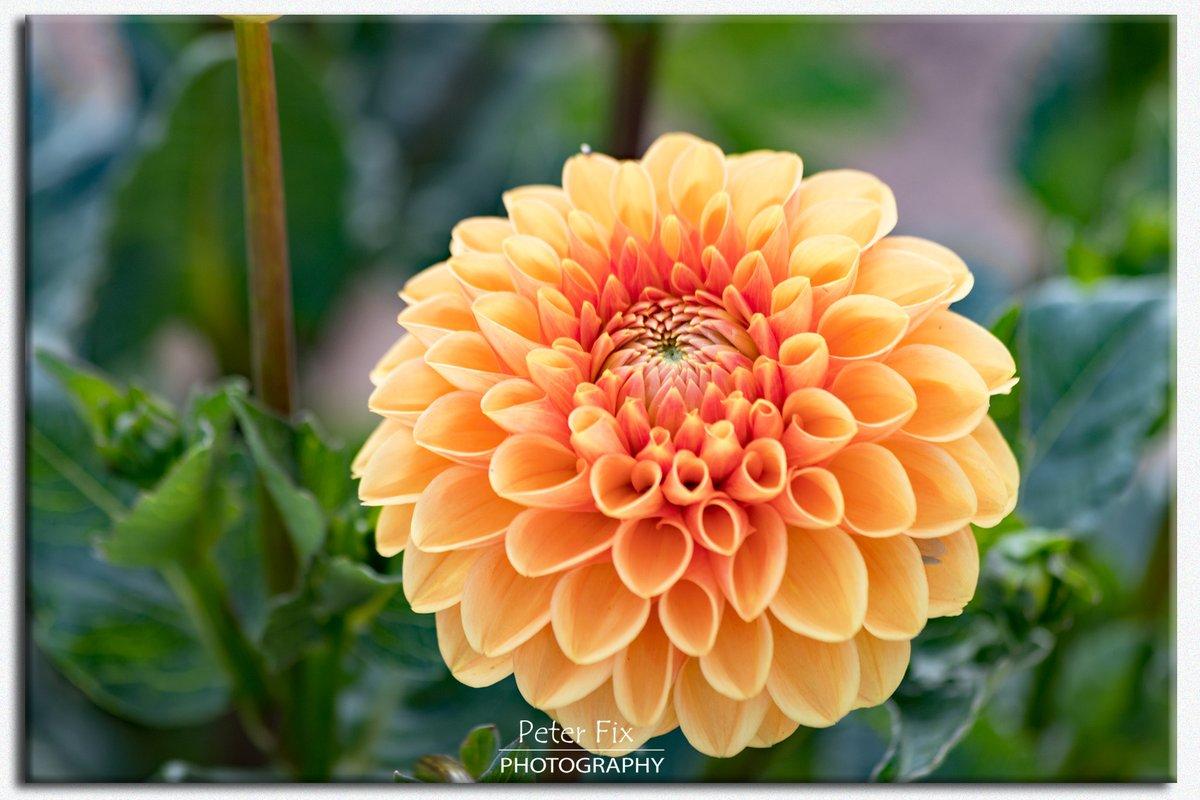 Enjoy the Sunshine  #blossom #flowers #naturelovers #countryside #nature #myphoto #photography #StaySave #WednesdayMotivationpic.twitter.com/7zNikJi4Lo