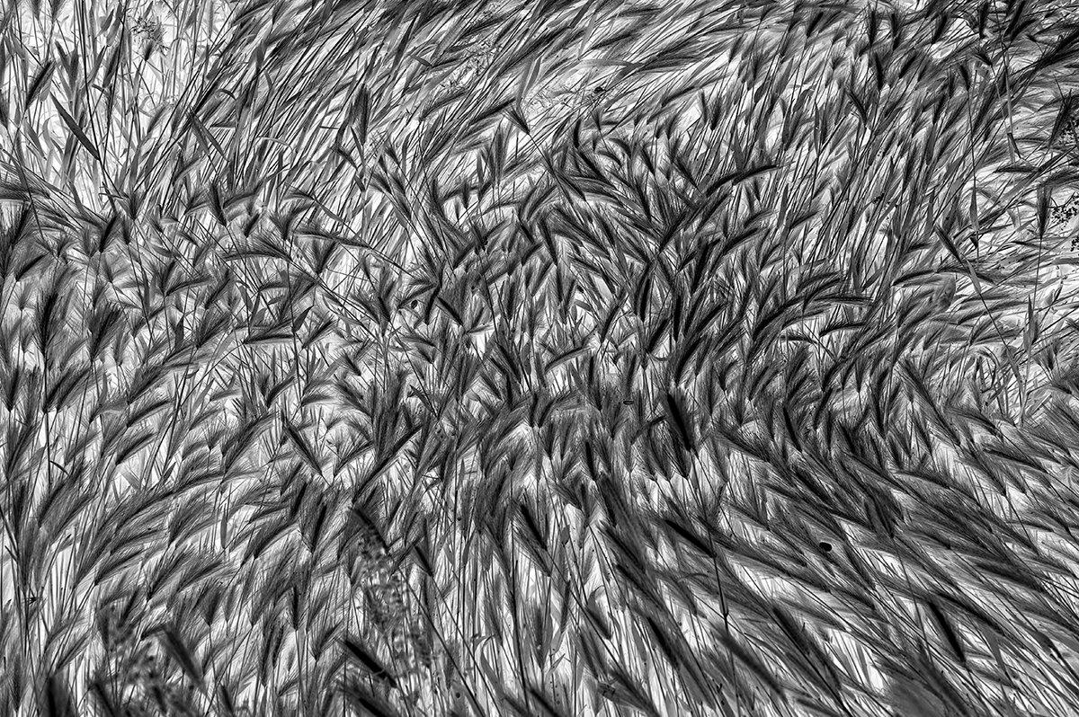 Grass Texture https://prometheus.med.utah.edu/~bwjones/2020/05/grass-texture/… #Leica #LeicaM pic.twitter.com/E3gmQhfge8