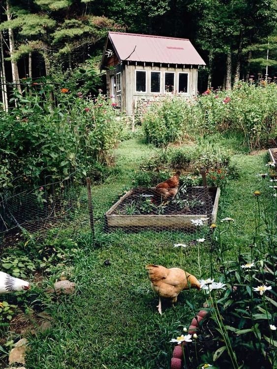 #Homesteading is something you can do at all different levels. A great way to get started is to just get some stuff in the ground and start experimenting with growing. I think it's the best example of #reuse and #rethink!  #offgrid #cabin #nature #selfsufficient #homesteadpic.twitter.com/MeUp6zFkxf