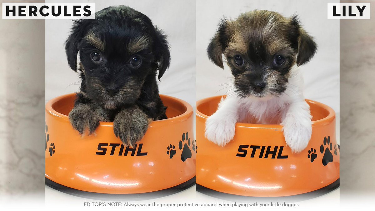 Meet Hercules and Lily, our newest #RealSTIHL fans. Fan photo from Tanya K. bit.ly/2yC989l