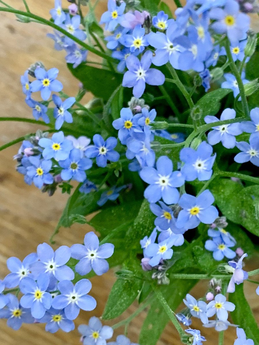 Sweet, sweet forget-me-nots in a vase for the table. #ThePhotoHour #NaturePhotography #PhotosOfMyLife #simplepleasures pic.twitter.com/c5UE5yb0qT