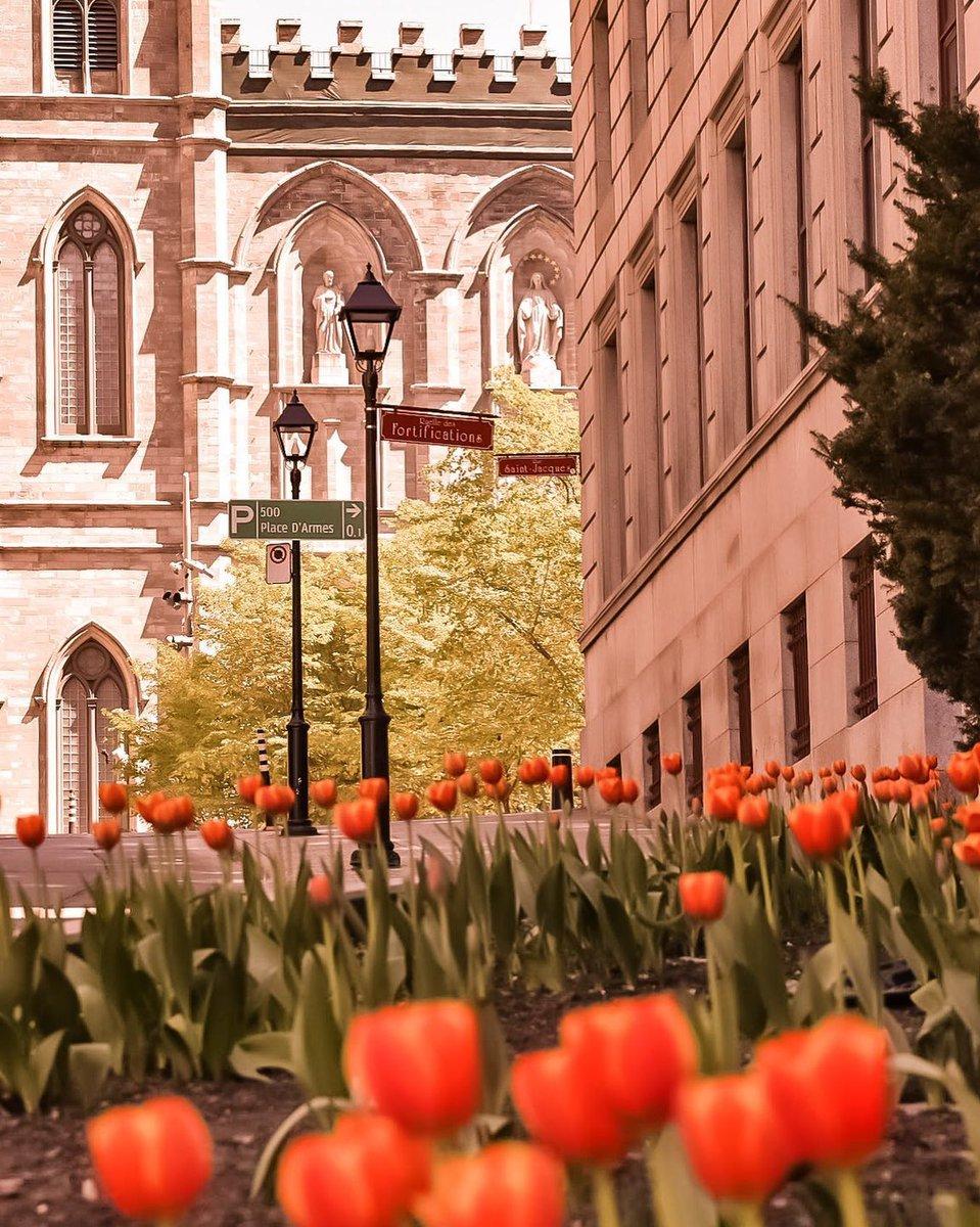 #Montréal in all its spring glory  #mtlmoments #VisitUsLater  kristelbautista13, assimphoto, bertexertier + duccnguyenpic.twitter.com/P9Lv6oy5Lp