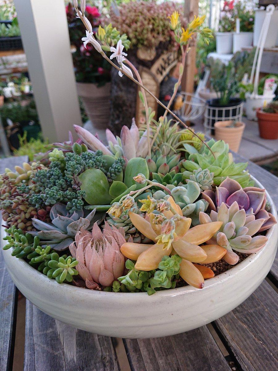 先日多肉植物の寄せ植えにお客様が来て下さいましたカラフル寄せ植え完成です  coco店長のここみとくるみお姉ちゃんトリミング行ってきたよ~可愛いくしてくれてありがとう  #多肉植物 #寄せ植え  #cocoガーデン #藤沢市石川 #サマーカット #トリミング #Sandiipic.twitter.com/LbxBRFN0My