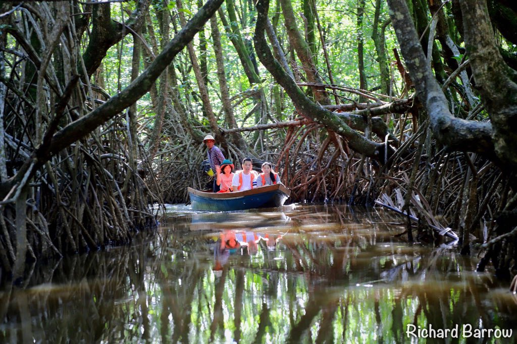 This is Ban Tha Ranae mangrove forest in Trat province. The local community have an eco-tourism project where you can take a boat ride out to the mangrove forest #VirtualTour #VirtualThailand #Thailand pic.twitter.com/ZxWv65M0yF