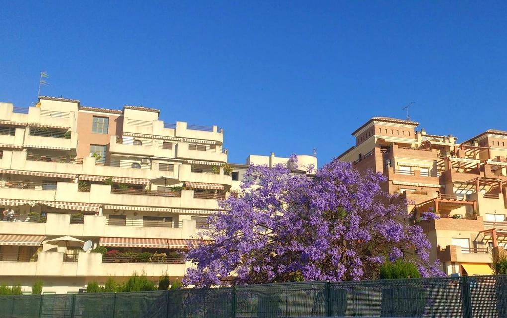 We always love the pops of purple in May! Almuñécar   #Almuñecar #LaHerradura #visitspain #turismospain #costatropical #picoftheday #Granada #Andalucía #España #Spain #travel   #turismoalmunecarlaherradurapic.twitter.com/o9rD22uzAU