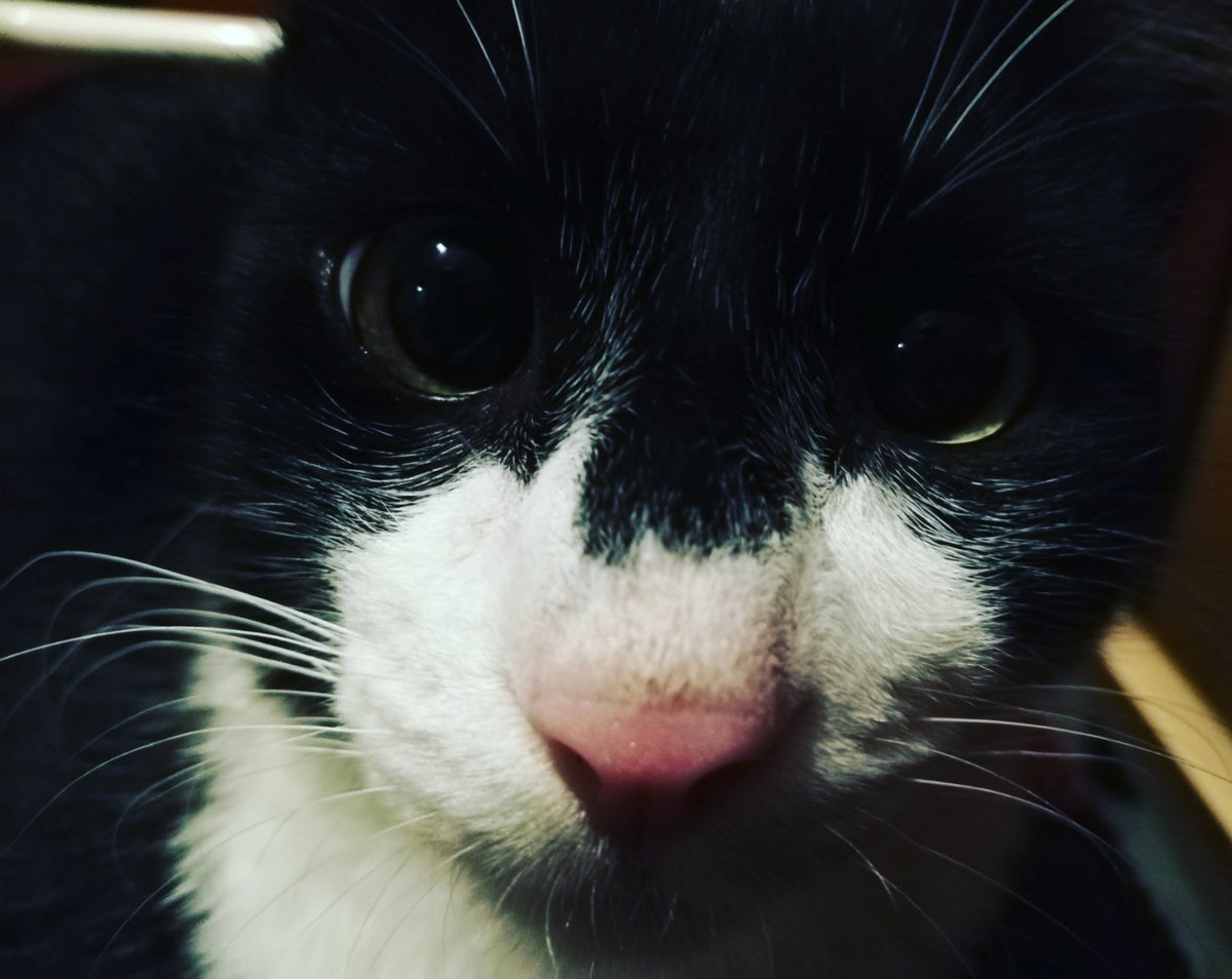 How when you want to take a photo and suddenly the front camera comes out  #CatsOfTwitter #Cat #gatos #CatsOfTheQuarantine #CatsOnTwitter #catlovers #cats #ilovemycat #Nikocat #gatitospic.twitter.com/AcBXTksJsA