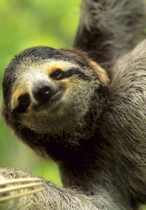 Hope a sloth smile will make you smile too. https://t.co/LXkBZDJ6cu