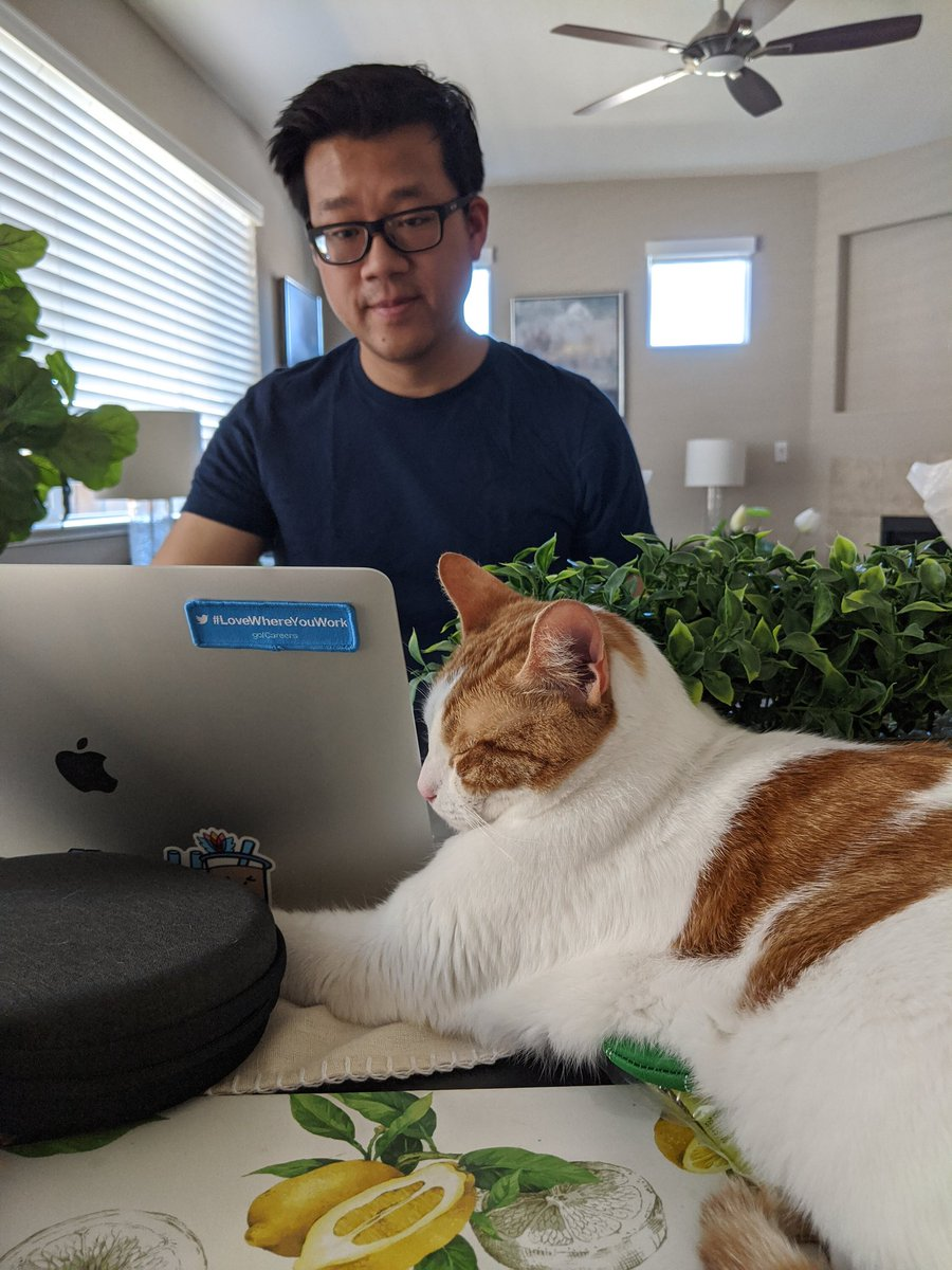 Andy is very determined to contribute to some code this morning. After being removed from the table multiple times and blocking his backside sneak attacks with this hedge barrier, he's finally settled for just one paw on the keyboard #CatsOfTwitter #lovewhereyouwork <br>http://pic.twitter.com/lAnGmegiYy