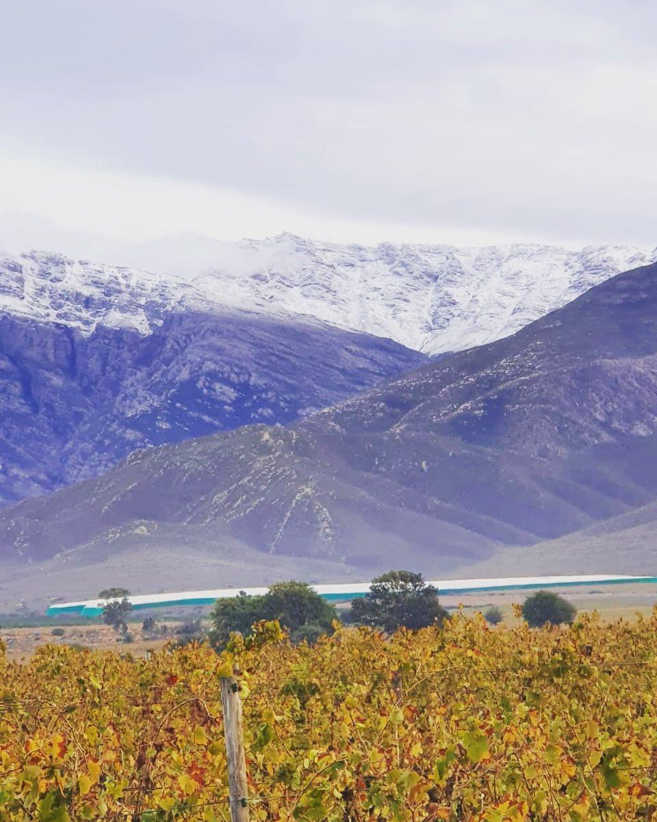 #WinterWonderland in the #NuyValley - have you ordered #NuyMuskadel yet?       #WineWednesday #Snow #WineOfTrueCharacter #SayNuyLikeMaypic.twitter.com/dYav9MTrG3