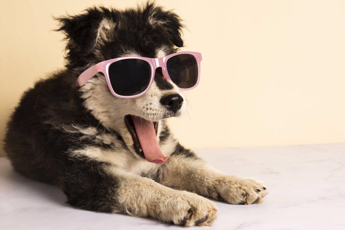 Thumbs up  if I am cool  enough  #cool #petinstapic.twitter.com/kfww0EqplR