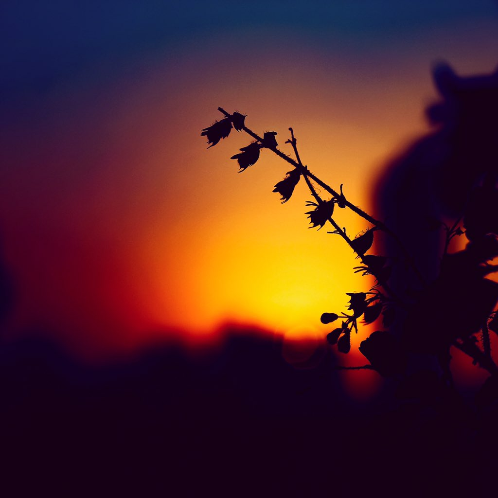 This beautiful sunset made this branch's day #sunset #sunsetphotography #silhouette #sunsetlover #sunsetspic.twitter.com/9sLW0iwTmB