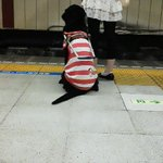 Image for the Tweet beginning: #盲導犬 #おりこうさん #感謝 #優しさ #共に生きる