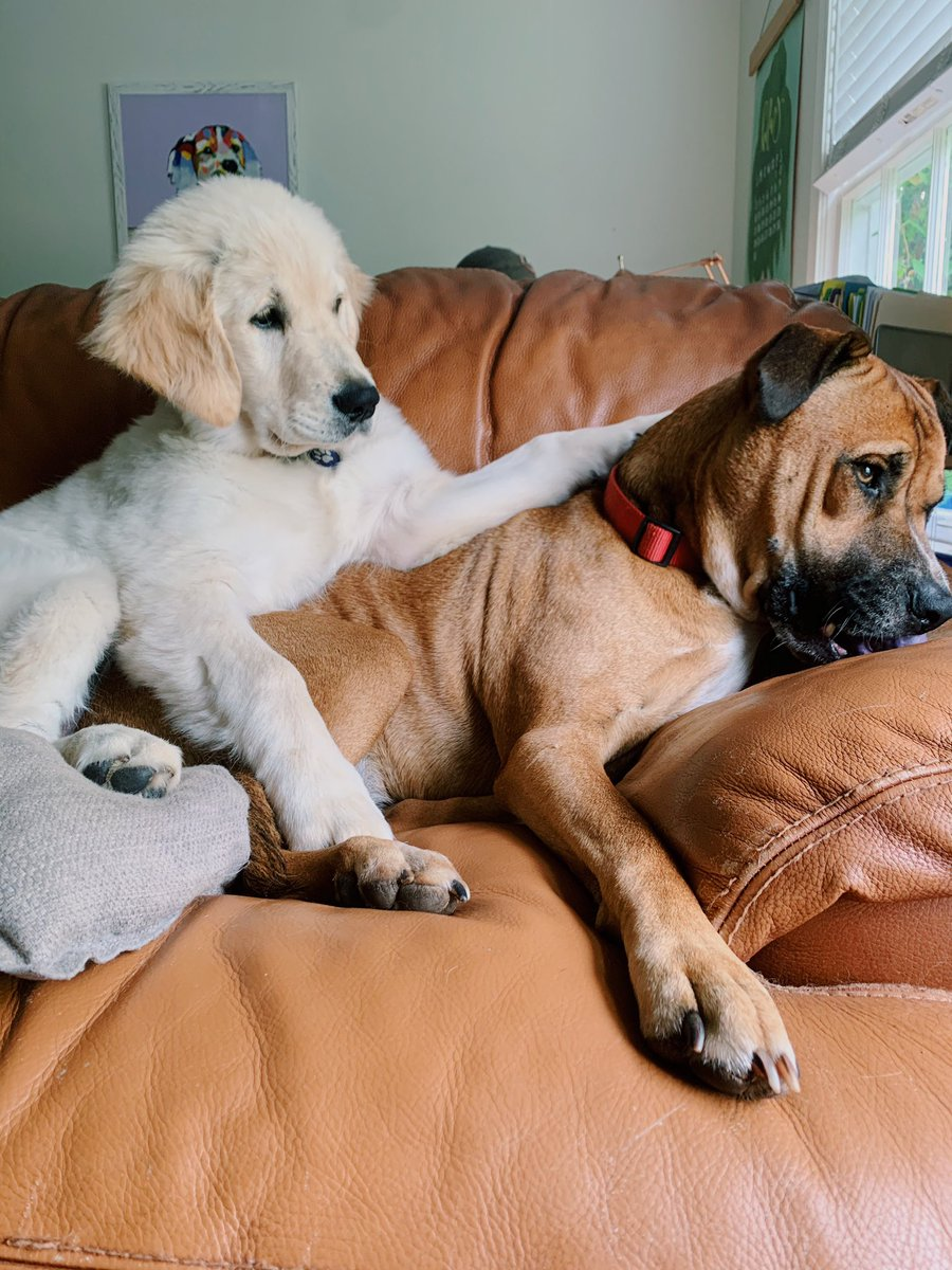 Apparently Marley and Murphy are puppy models now