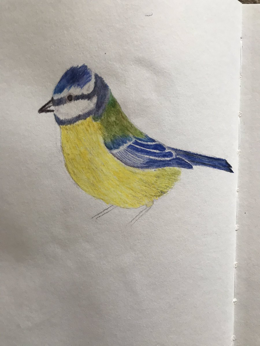 Day 68 of social distancing Well the Bluetit is finished! And I still can't draw feet!) The moth trap last night produced another new for the garden with this beautiful green pug! #socialdistancing #lockdownart #ukmothspic.twitter.com/S1kgv9O3o7