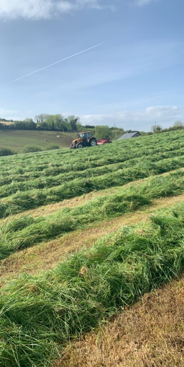 I feel sorry for my future wife because I don't think I'll be fit to love her as much as I love silage. #grass #grass2020 #silage #agriculture #farming #beef #lovepic.twitter.com/bMff7KLgqR
