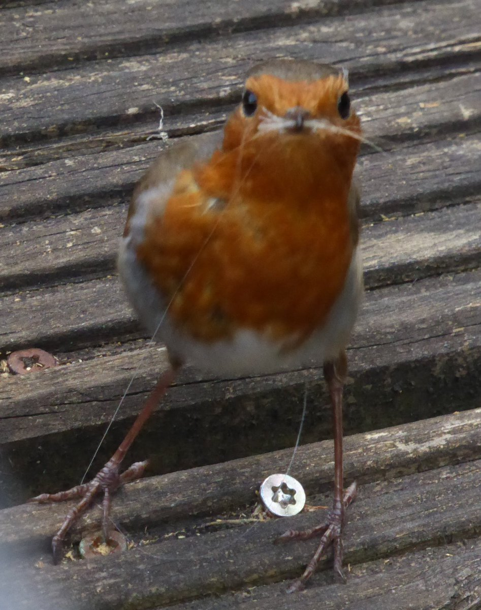 Today's #simplepleasures He looks like a little old man #robinpic.twitter.com/asq49kwuJR