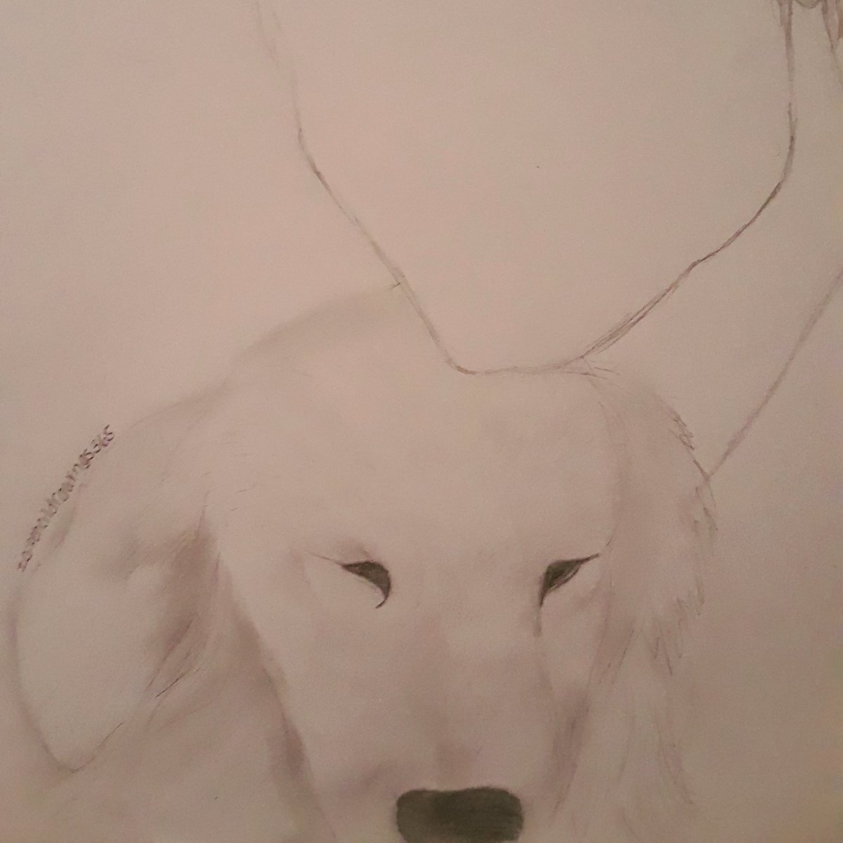 In progress , I'm not really good at animals lol #art #drawimg #pencilartpic.twitter.com/VKOJc3sJfl
