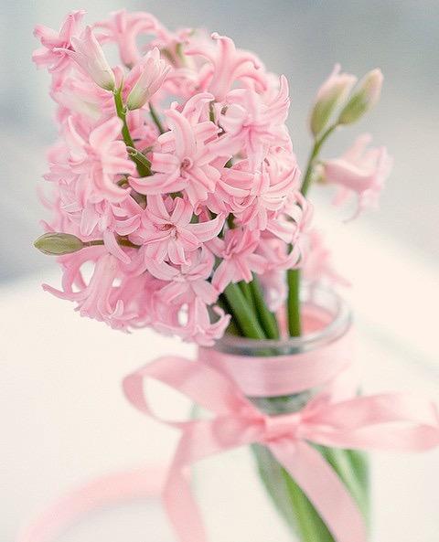 """""""bir çiçeği büyüten sevgi, insanı değiştirmez mi sanıyorsun?!.."""" #çiçek #insan #sümbül #pembe #pink #flowers #hyacinth"""