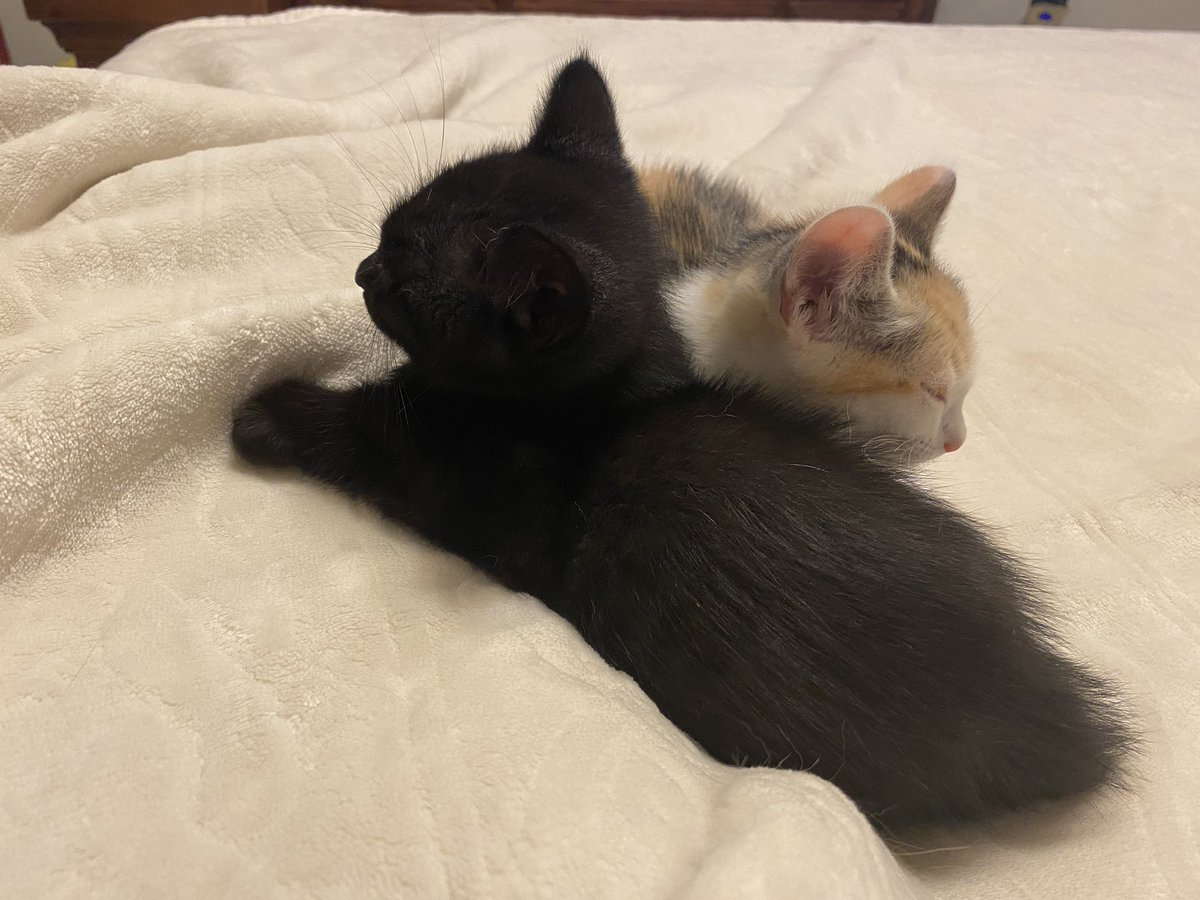 These guys are crazy when they're awake but so darn cute. Welcome to the family. #Binx #Jessiepic.twitter.com/ZUD6JC98o4