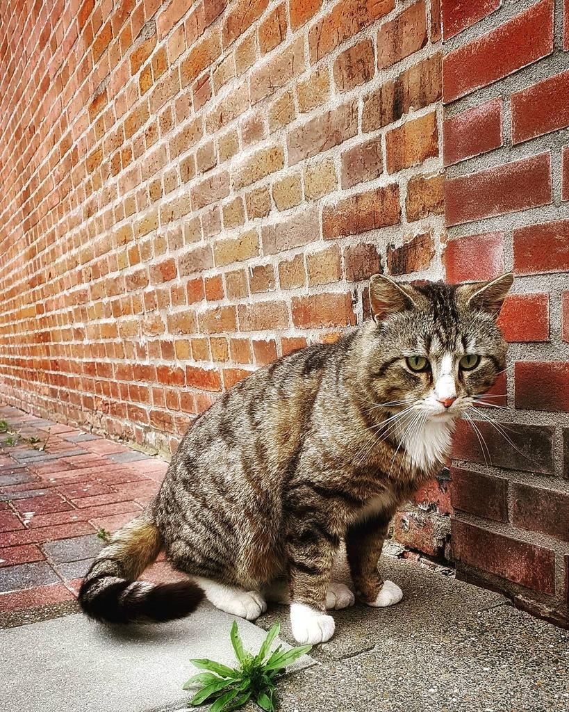 #neighborhoodcat #cat #kat #кот #catsofinstagram #animallovers #animalart #catsoftheworld #catstagram https://instagr.am/p/CAtOYsKJF-s/pic.twitter.com/zKobJiSlfr