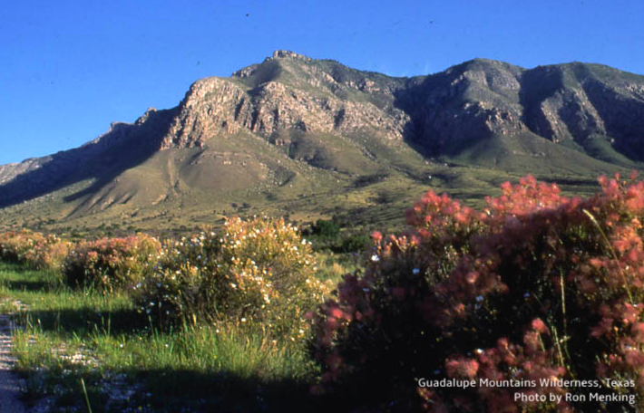 The Guadalupe Mountains Wilderness in Texas contains the most extensive exposed fossil reef on the earth, formed 260 million years ago, when a great sea covered this area. Today, the #Wilderness is home to 900 plant, 60 mammal, 310 bird, and 55 reptile and amphibian species. pic.twitter.com/jtDWxM7Nvq