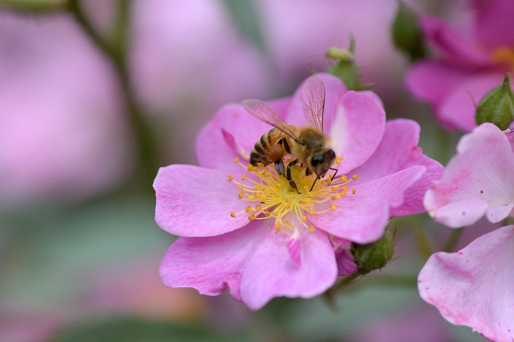 #GlamorChina Gorgeous flowers and busy bees are photographed in Beijing Botanical Garden. <br>http://pic.twitter.com/xdprLq9ISE