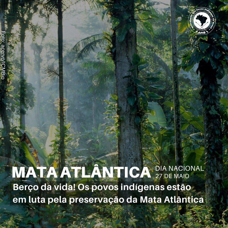 Desmatamento na Mata Atlântica cresce cerca de 30% este ano e nós da APIB queremos reforçar hoje, no Dia Nacional da Mata Atlântica, a importância de lutarmos pela preservação deste bioma tão para vida de todos nós! #mataatlantica #povosindigenas #27demaio