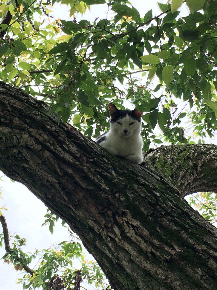 木の上ってひんやりだよ