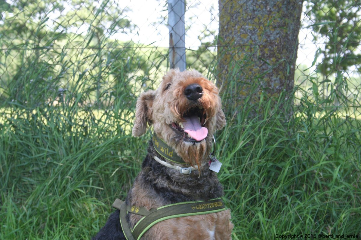 If you like this smile, consider that #Happiness   for others is just a retweet away. dogsarejoy pic.twitter.com/kSK2fQmhur