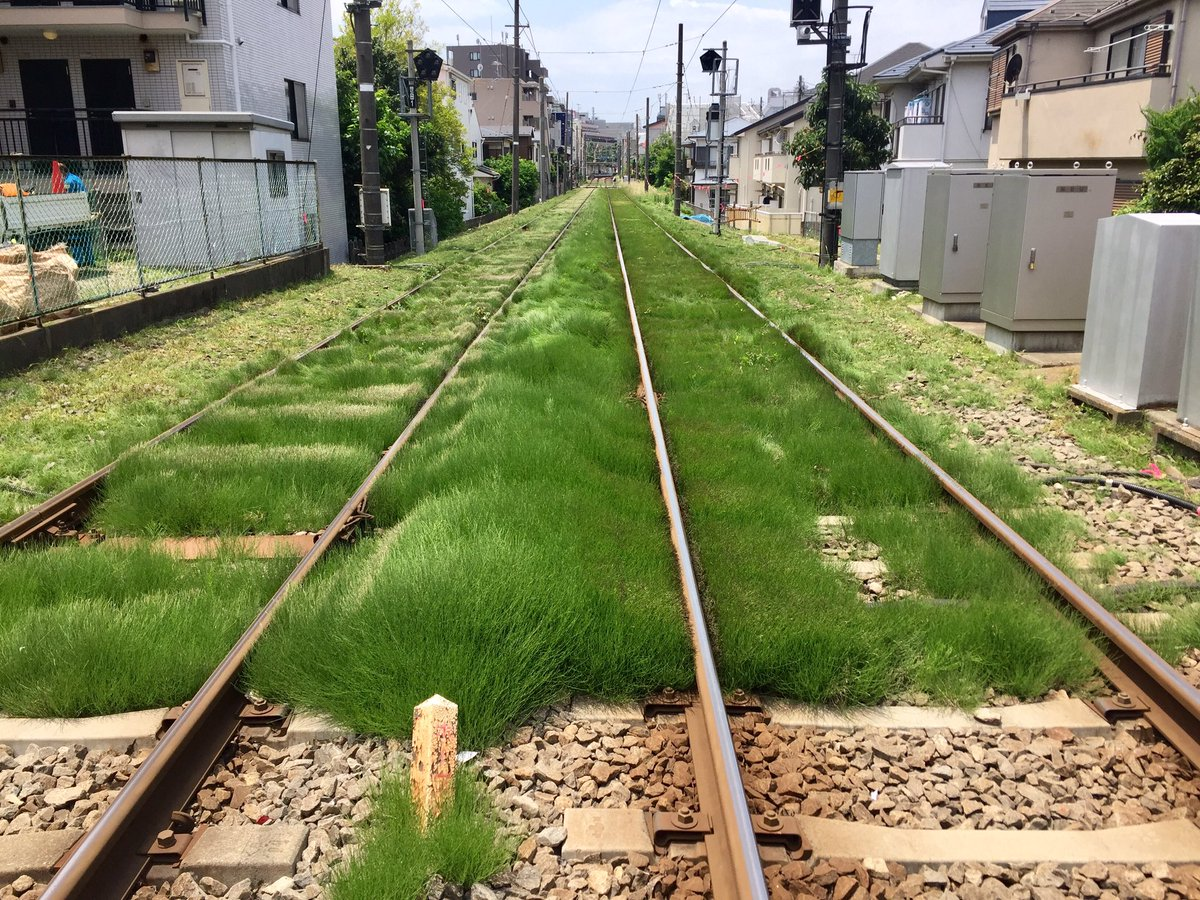 世田谷線は今日もふわっふわで、いいですね〜。