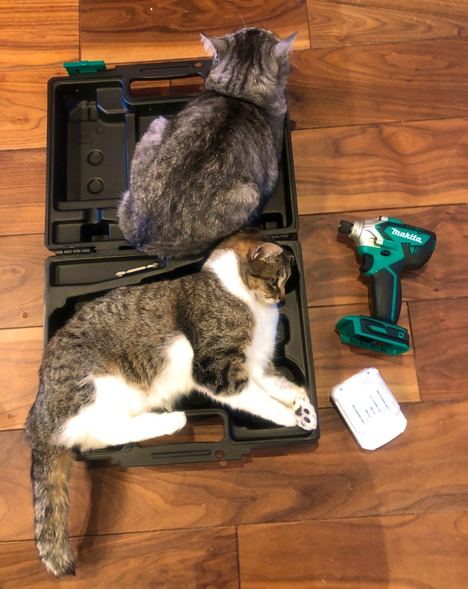 ジャストサイズ??工具ケースは猫を収納するためのケースだった!?ww