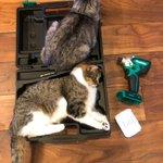 ジャストサイズ??工具ケースは猫を収納するためのケースだった!?