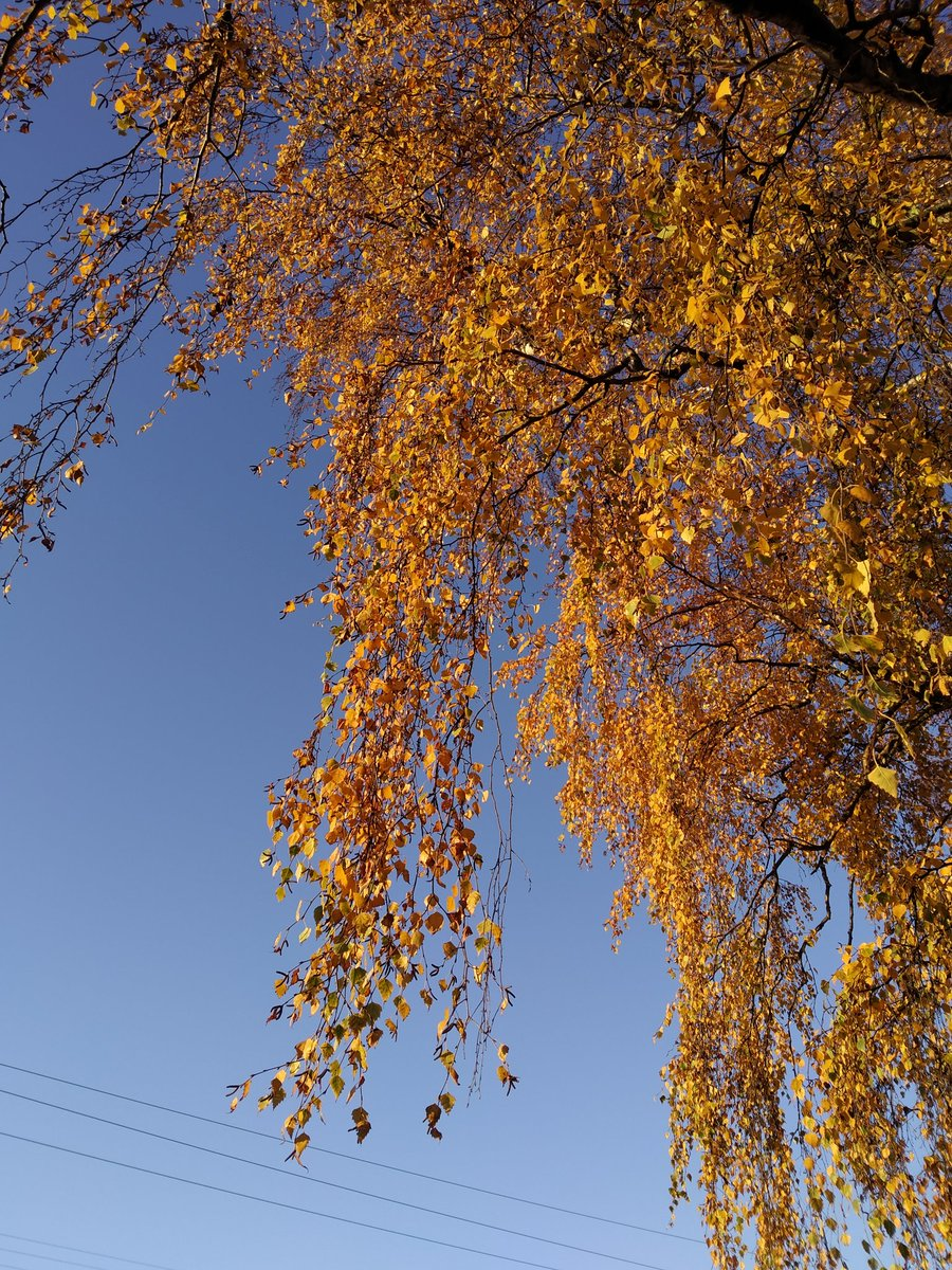 Autumn in #NewZealand <br>http://pic.twitter.com/cyi2oiMYqZ