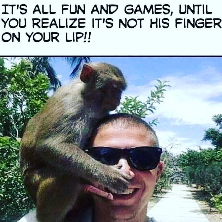 #justforlaughs #monkeybusiness #holidayphotospic.twitter.com/nE3FdtnZA4