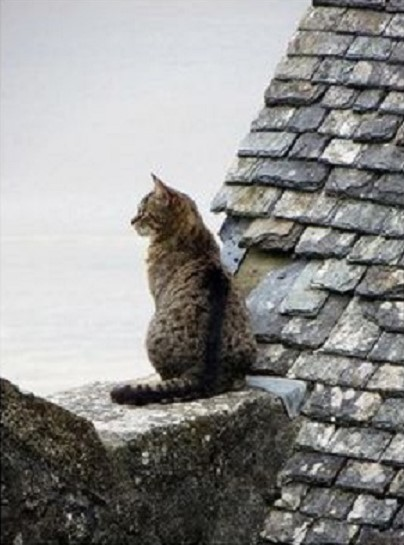 """like my """"master"""" i can watch the spectacle of the world for hours .... <br>http://pic.twitter.com/8EcX7uakQ6"""