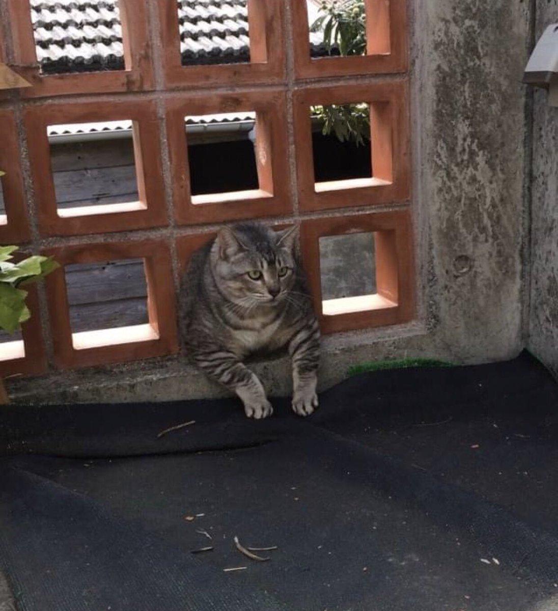 RT @2hahakame: 「笑うと免疫あがるよ」って母から送られてきた。昔飼ってた猫が太りすぎた結果、ブロックにはまって15分放置されてた時。また猫飼いたいなぁ https://t.co/ULysoBKbXV