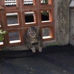 笑うと免疫あがるよ!太り過ぎた飼い猫がブロックにはまって15分放置されてた時の写真!