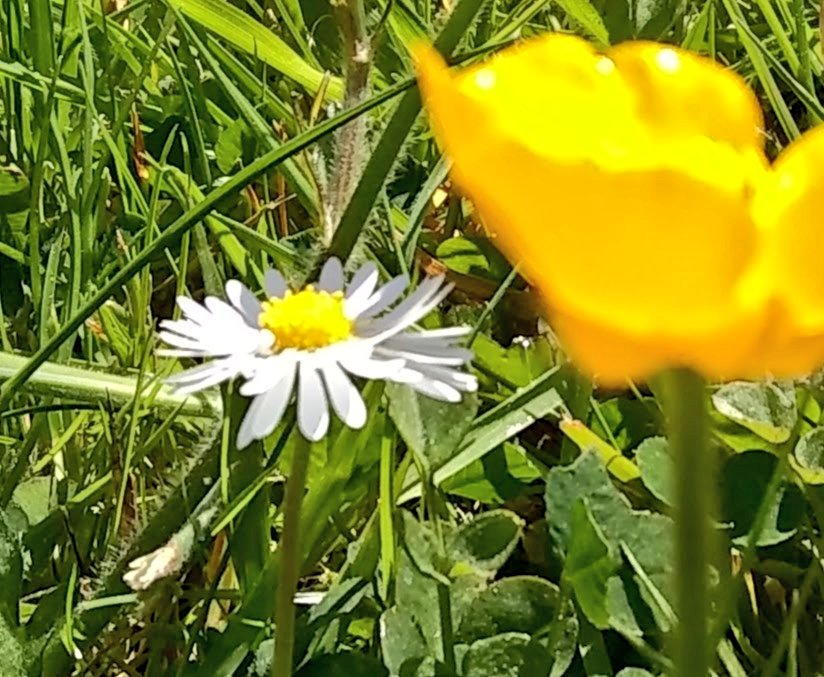 morning all  the sky's blue, the sun's already bright it's one of those #buttercup and #daisy days that fills you with delight   wishing you a #happy day #StayHomeSaveLives #StayAlert #staysafe #stayhealthy #MyPhoto #photooftheday #nature #mentalhealth #selfcare #Inspirepic.twitter.com/p8WsDW7pvc