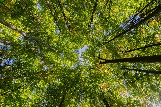 The whispering sound of the wind rustling through the leaves of trees is called PSITHURISM.