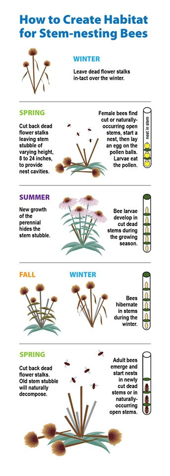 @BCPSOutdoorSci good little image to share and timely since cone flowers are blowing up right now