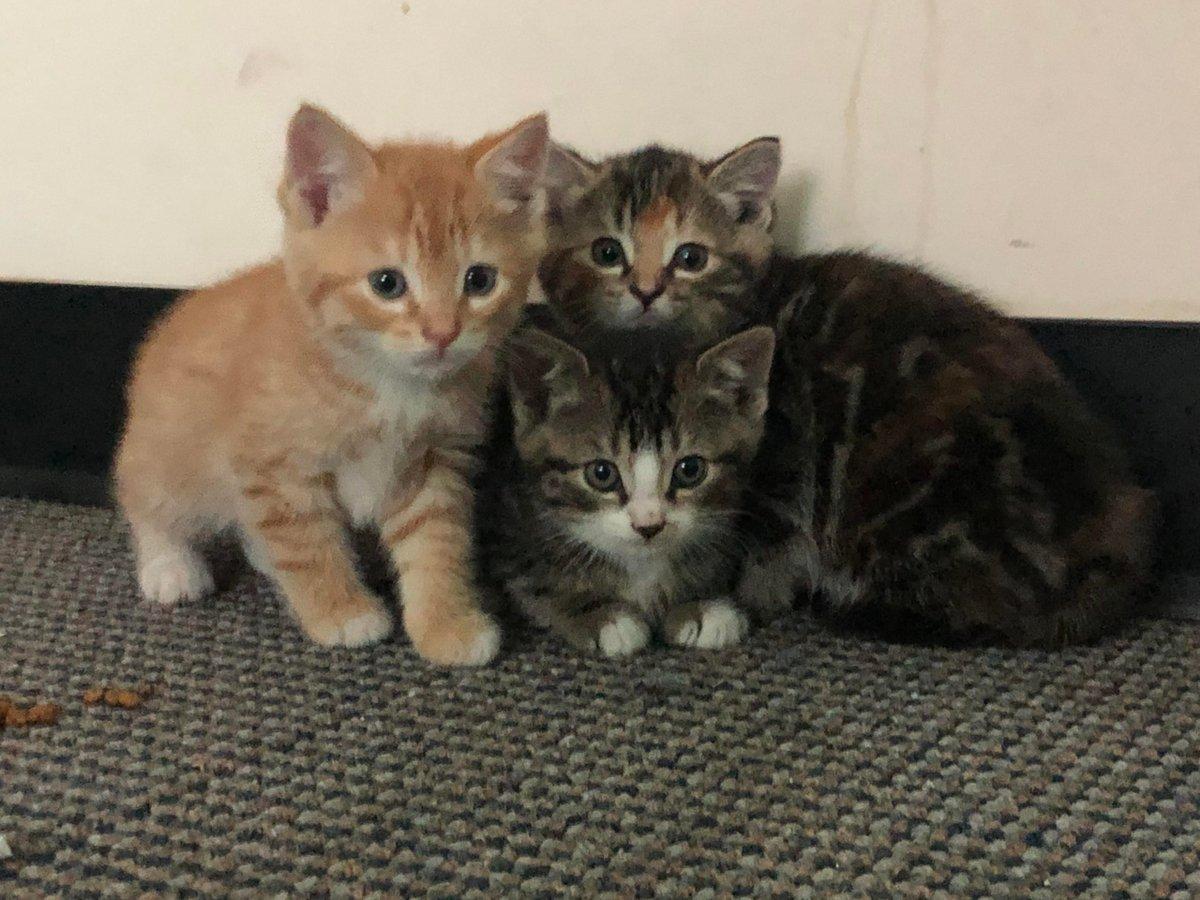 Our #Memorial #Day #Rescue #Kitties are #Posing for another #Family #Photo!   #Cats #Cat #Kittens #Kitten #Kitty #Pets #Pet #Meow #Moe #CuteCats #CuteCat #CuteKittens #CuteKitten #MeowMoe    https://t.co/PnSaTkOjnf https://t.co/0uzfRcwr5v