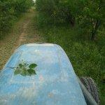 Image for the Tweet beginning: #KirazDiyari bahçedeki otlar traktörle biçildi.