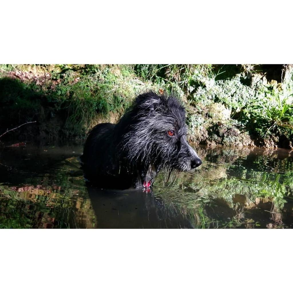 Today, on River Monsters... http://jongoikouria.com #rivermonsters #animalsofinstagram #animals #animallovers #dogsofinstagram #dogstagram #dog #picoftheday #naturephotography #bath #natureshots #bordercollie #basqueshepherd https://instagr.am/p/CAuj9fgAreA/pic.twitter.com/9RCTbukNAG