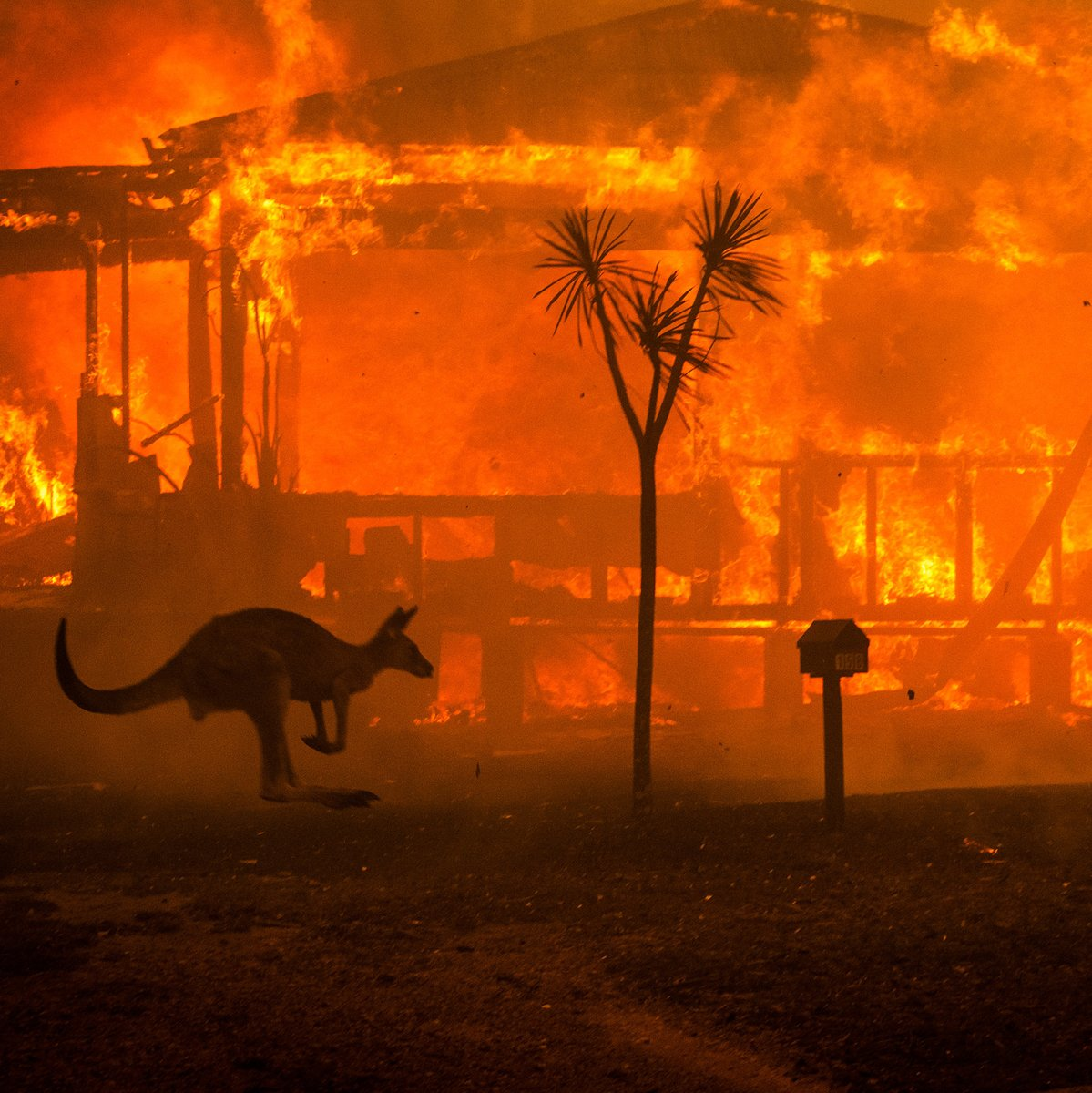 Do you remember when we all thought 2020 would be a great year? And we haven't done half yet.  #AustralianFires #COVID19 #Kobebryant #JusticeForGeorgeFloydpic.twitter.com/RABJBZ0hvw