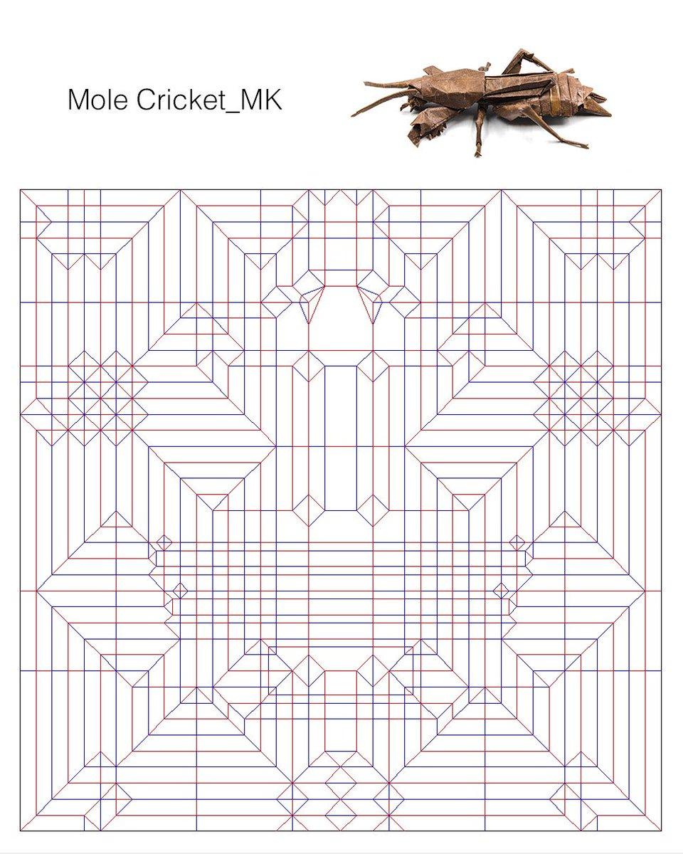 mole cricket <br>http://pic.twitter.com/pFHjWZwIKg