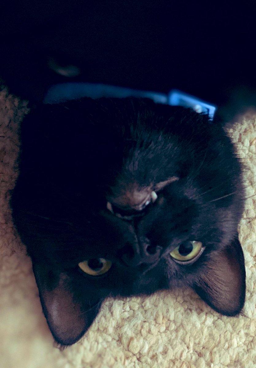 Kylo and his teefies! #BlackCat pic.twitter.com/imu8zB90ke