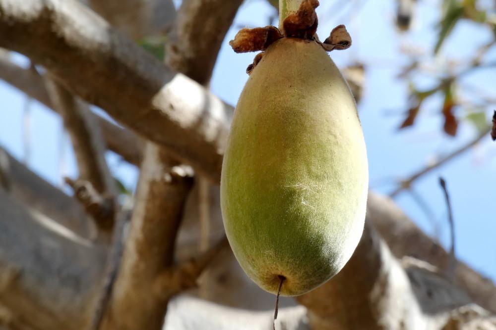 Exotisk frukt ska smaksätta ny burgare https://t.co/tronT8MTQl https://t.co/sFtBPH39IY