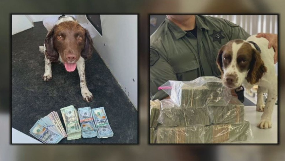 Fresno Co. K-9 deputies sniff out almost $150k during first two days on the job   😀Wow! Coco and Willow starting with the right paw. https://t.co/4dENAXpePO #dog #K9 #police #Military #WaronDrugs #MAGA #KAG #2A #WWG1WGA #Trump #QAnon #CCOT #LivePD https://t.co/XVksWBqGyW